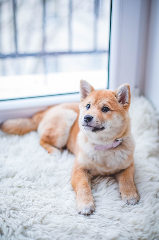 pet friendly house cleaning service near me